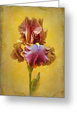 Afternoon Delight - 2 Greeting Card