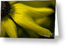 Afternoon Flower Greeting Card
