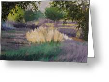 Afternoon  Grasses Greeting Card
