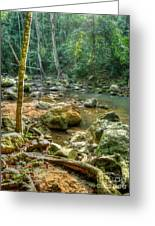 Afternoon In The Jungle Greeting Card