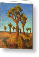Afternoon Light At Joshua Tree Greeting Card