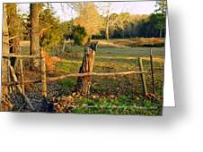 Afternoon Orange Gold Glow On Old Broken Fence Greeting Card