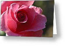 Afternoon Rose Greeting Card
