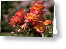 Afternoon Roses Greeting Card