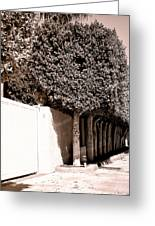 Afternoon Sun Bw Palm Springs Greeting Card