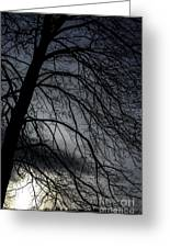 Against A Winter Sky Greeting Card
