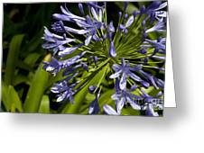 Agapanthus Flower And Bee Greeting Card