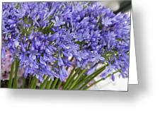 Agapanthus Flower Stalk Display At Florist Greeting Card