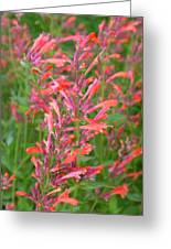 Agastache Field Greeting Card