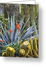 Agave And Cactus Greeting Card