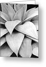 Agave Detail Greeting Card