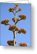 Agave Flowers II Greeting Card