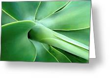 Agave Heart Greeting Card