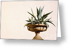Agave In Pot Greeting Card