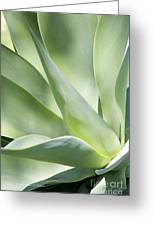 Agave Plant 2 Greeting Card