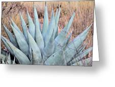 Agave Plant In The Chisos Mountains Greeting Card