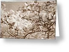 Antique Magnolia Bloom Greeting Card