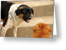 Aggressive Dogs Greeting Card
