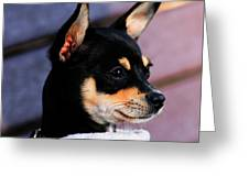 Agie - Chihuahua Pitbull Greeting Card