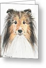 Agility Dog Sheltie In Pastel Greeting Card