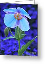 Aglow In Blue Tall View Greeting Card