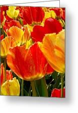 Agressive Tulips Greeting Card