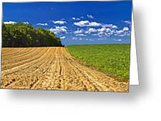 Agricultural Landscape - Young Corn Field Greeting Card