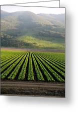 Agricultural Rows Greeting Card