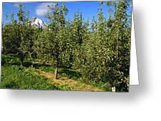 Agriculture - Bosc Pear Orchard Greeting Card