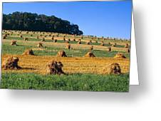 Agriculture - Contour Strips Greeting Card