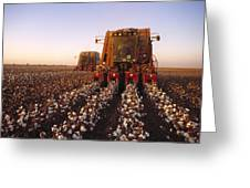 Agriculture - Cotton Harvesting  San Greeting Card