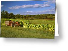 Agriculture - Fields Of Maturing Flue Greeting Card by R. Hamilton Smith
