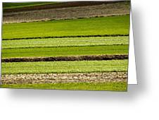 Agriculture Layers Fields And Meadows Greeting Card