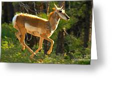 Airborn Pronghorn Greeting Card