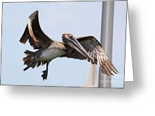 Airborne Brown Pelican Greeting Card