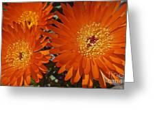 Orange Burst Akuli Kuli Greeting Card