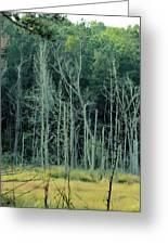 Alabama Autumn Marsh Greeting Card by Maria Urso