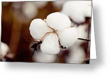 Alabama Cotton Greeting Card