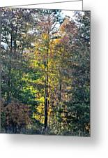 Alabama Forest In Autumn 2012 Greeting Card