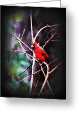 Alabama Rain - Cardinal Greeting Card