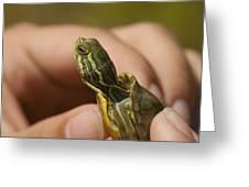 Alabama Red-bellied Turtle -  Pseudemys Alabamensis Greeting Card