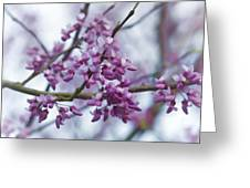 Alabama Redbuds Greeting Card