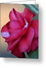 Alabama State Flower Greeting Card