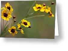 Alabama Wildflowers Coreopsis Tinctoria Tickseed Greeting Card