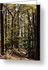 Alabama Woodlands In Spring 2013 Greeting Card