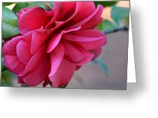 Alabama's Fading Camelia Greeting Card