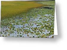 Alaska - Lily Pond And Marshy Meadow Greeting Card