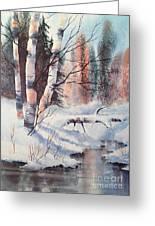 Alaska Birch II Greeting Card