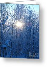 Alaska Sunrise Illuminating Through Birches And Willows Greeting Card