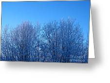 Alaska Sunrise Lighting Willows In Winter Greeting Card